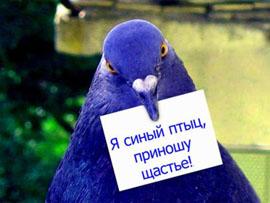синий птиц