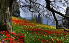 цветы поле