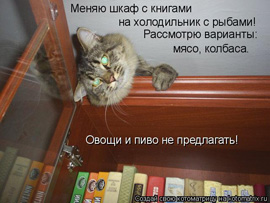 кот меняется