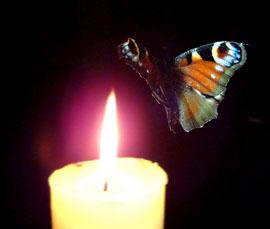 бабочка огонь