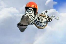 зебра полет