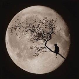 полная луна и кошка