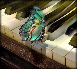 бабочка и фортепиано