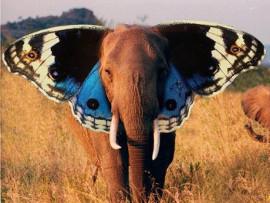 слон-бабочка