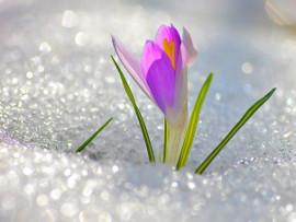 веснаБ