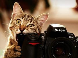 кот фотоапарат