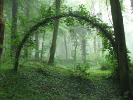 портал в лесу