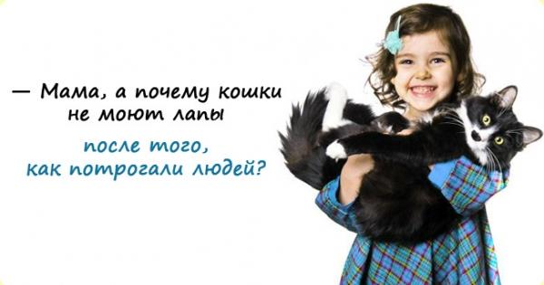 koshki-lapy